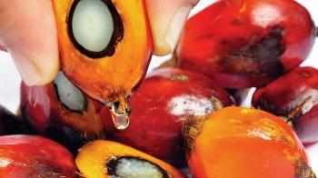 Ấn Độ: Bộ Kinh tế giảm thuế nhập khẩu đối với các loại dầu thực vật