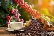 Mức giảm mạnh của nông sản có thể tác động tiêu cực đến giá đường và cà phê