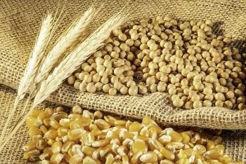 Brazil: ANEC tăng dự báo xuất khẩu đậu tương trong tháng 6