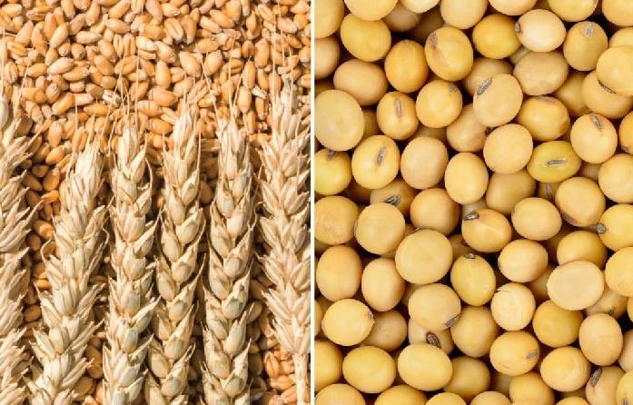 Chất lượng mùa vụ liên tục giảm xuống sẽ là yếu tố hỗ trợ cho giá ngô và lúa mì