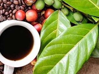 Giá cà phê hai sàn tăng với biên độ rộng trong phiên 14/7