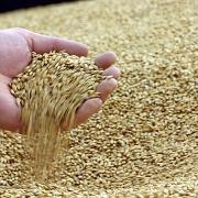 Ukraine: Giá lúa mỳ xuất khẩu tại biển Đen giảm trong khi giá ngô tăng nhẹ