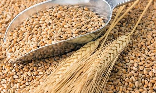 Trung Quốc: Nhập khẩu ngô, lúa mỳ và đường trong tháng 10 theo số liệu của hải quan
