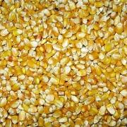 Brazil: Xuất khẩu ngô trong tháng 11 dự kiến vượt 5 triệu tấn