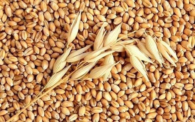 Ukraine: Xuất khẩu lúa mỳ hiện đã đạt 66.5% hạn ngạch đề ra cho niên vụ 2020/2021