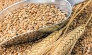 Australia: Lúa mỳ và bông có thể là nạn nhân tiếp theo của chiến tranh thương mại