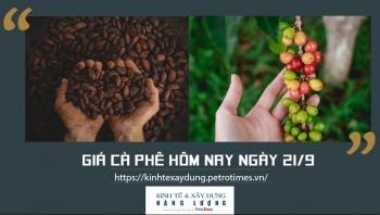 Giá cà phê hôm nay ngày 21/9: Giảm nhẹ tại một số địa phương trọng điểm