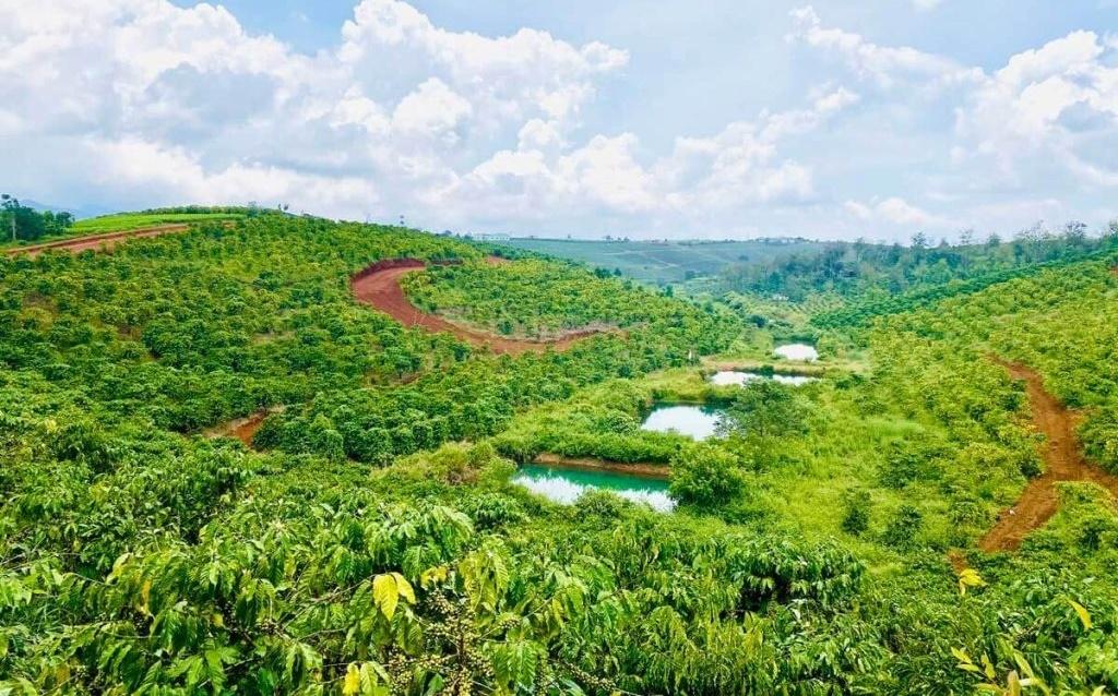 Lâm Đồng siết quy định việc tách thửa đất
