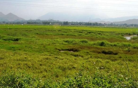 Vân Đồn chặn đầu cơ đất: Người ngoại tỉnh bỏ hoang đất nông nghiệp sẽ bị thu hồi