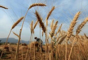 Dự báo sản lượng và xuất khẩu ngũ cốc của Ukraine 2021/22 tăng mạnh