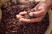 Giá cà phê hôm nay 24/6: Bứt phá mạnh mẽ