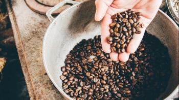 Giá cà phê hôm nay ngày 19/7: Thế giới tăng mạnh, trong nước đi ngang