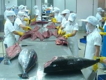 Giá cá ngừ thế giới nói chung và tại EU nói riêng dự kiến tiếp tục duy trì xu hướng tăng. Ảnh minh họa