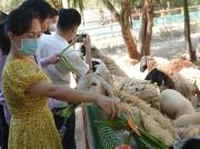 Bình Định xin đón khách quốc tế từ tháng 11