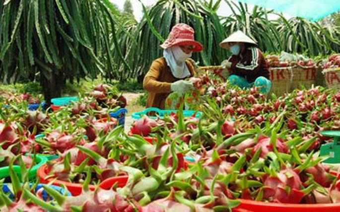 Long An hỗ trợ nông dân đưa hàng hóa, nông sản lên sàn thương mại điện tử