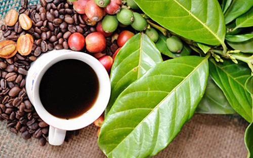 Giá cà phê hôm nay 11/4: Ghi nhận xu hướng tăng trong cả tuần