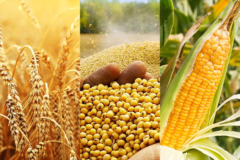 Thời tiết thuận lợi tại Brazil cùng với dịch bệnh bùng phát tiếp tục gây sức ép lên giá nông sản tuần này