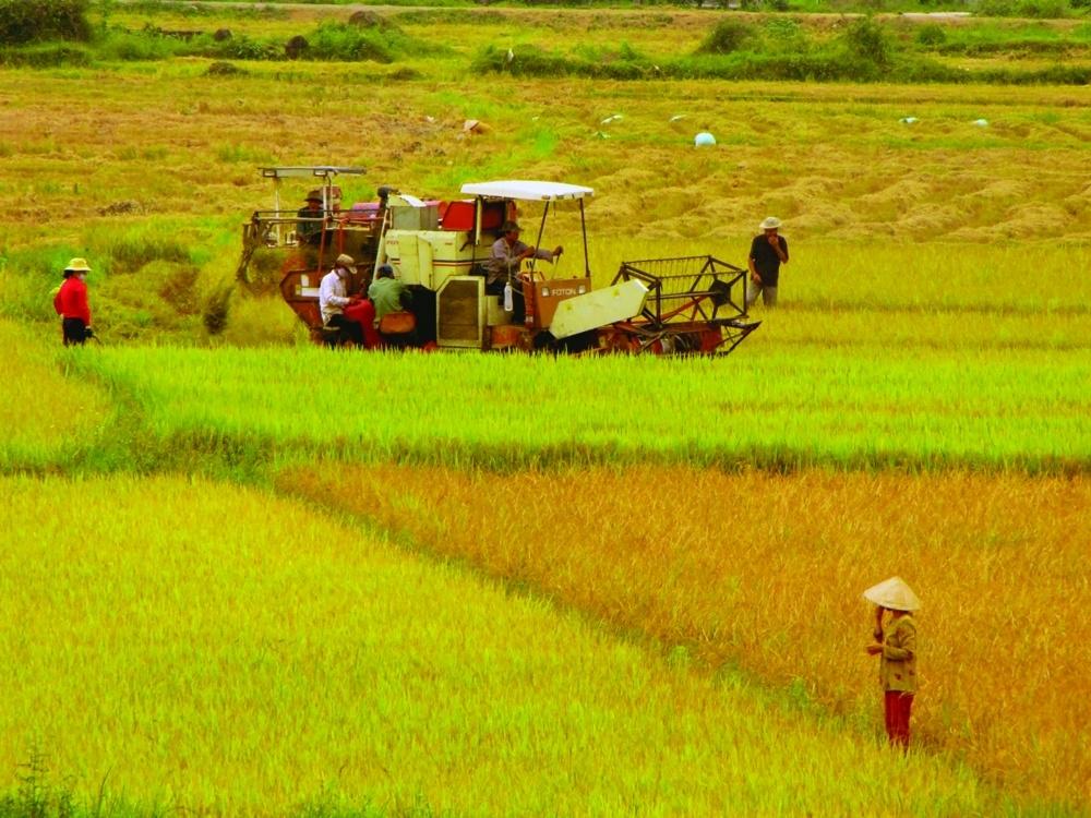 Bình Định được phép thực hiện chuyển mục đích sử dụng đất trồng lúa